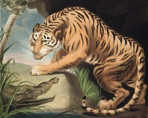 James Northcote - Tiger And Crocodile, Engraved