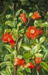 Marianne North - Flowers of the Pomegranate, Painted in Teneriffe