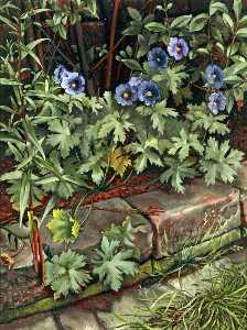 Charles William Oliver - Blue Geraniums