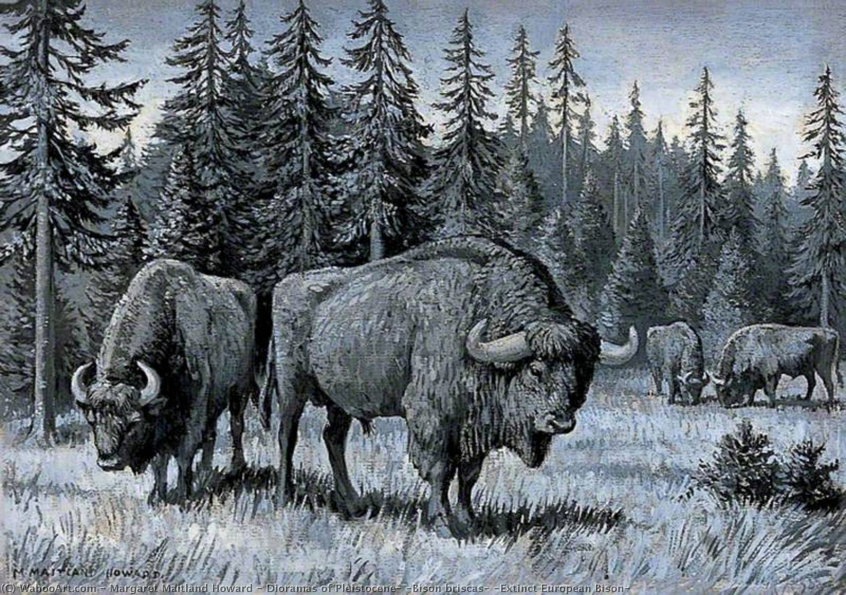 famous painting Dioramas of Pleistocene, 'Bison briscas' (Extinct European Bison) of Margaret Maitland Howard